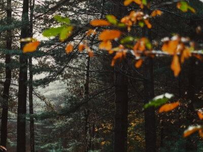 Técnico de Recursos Florestais e Ambientais